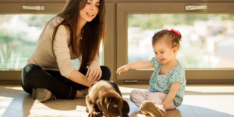 Pet Friendly Flooring Is More Diverse Than You Think