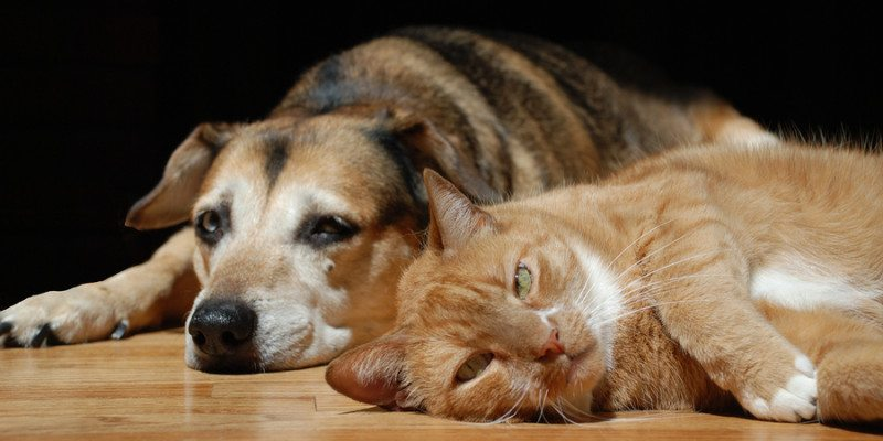 3 Flooring Choices Perfect For Pet Lovers
